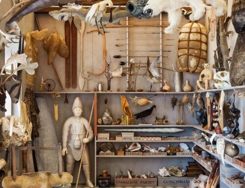 Il ritorno del Museo Wormianum – ROSAMOND PURCELL