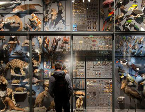 Museo di Storia Naturale, Berlino