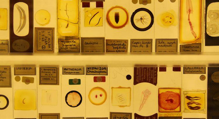Micrarium, Grant Museum of Zoology, Londra