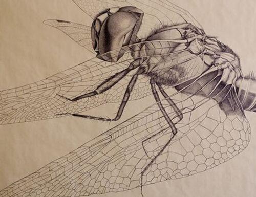 Gli insetti di MARCELLO CARRA'