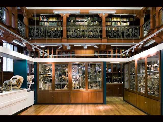 Grant Museum of Zoology, Londra